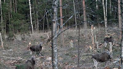 Doormodderen met biomassa is gevaarlijke struisvogelpolitiek